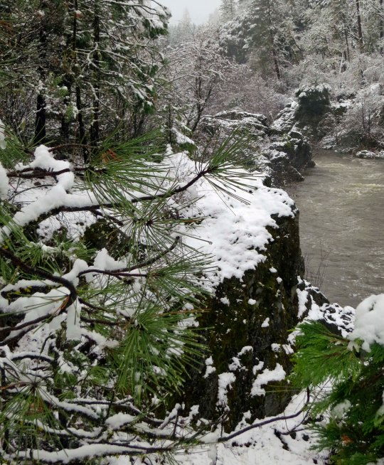 Our walk takes us down to the Applegate River, which borders on the front of our property.