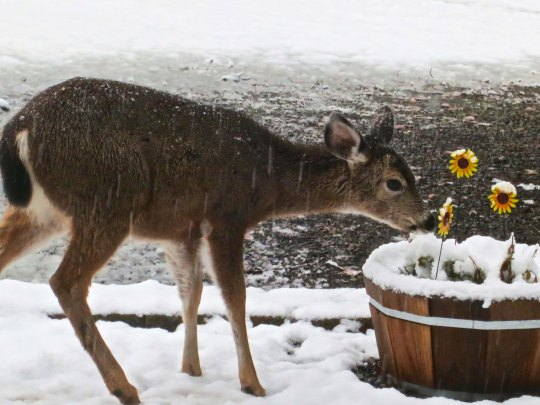 As we stepped out our back door, this young fellow was taking time out to smell the daisies. (That's called artistic license. Actually he was checking the metal flowers to see if they were edible.)