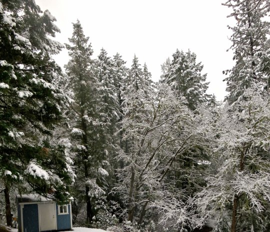 Snow covered trees towered over our tool shed. There would be no yard work today!