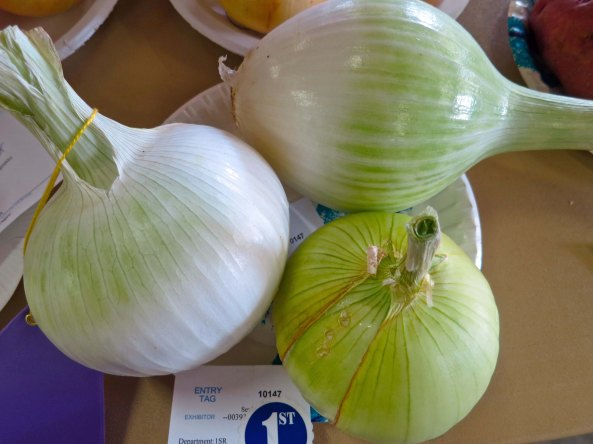 And how about these prize onions? A local farmer probably grew these in her backyard garden.