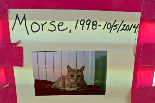 Morris the Cat was born in 1998 and passed away