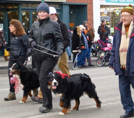 Bernese Mountain Dogs were out in force at the parade.