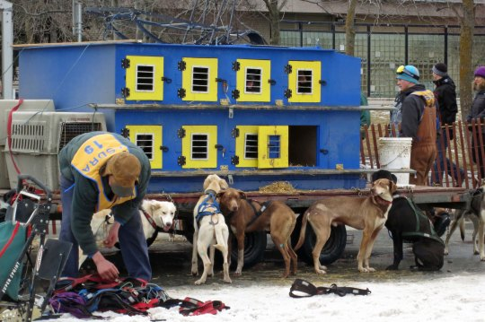 When we arrived, mushers were busily harnessing their dogs. 4th Street was lined with vehicles like these.