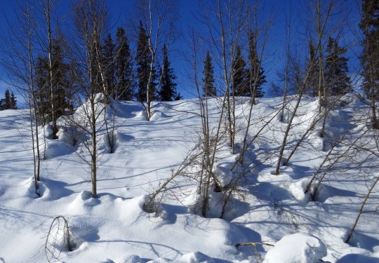 Snow, trees and shadows provided interesting compositions.