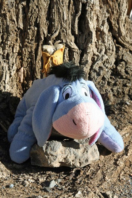 Eeyore rescues Bone from the hangman's noose in Tombstone, Arizona allowing him to continue his journeys around the world. Bone travelled with me on my bike trek.