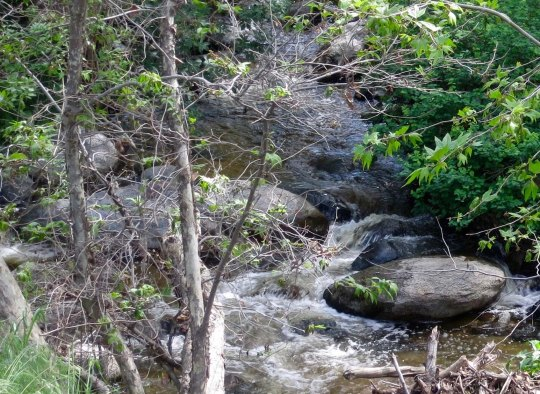 A charming stream beckoned.