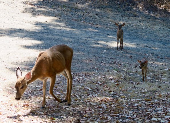 "It almost seems like this doe is doing a curtsy. ""Let me present my two babies."""