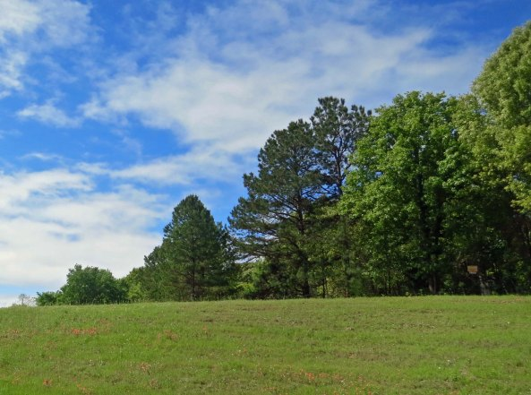 Green, green grass and pine trees in the rolling hills as East Texas.