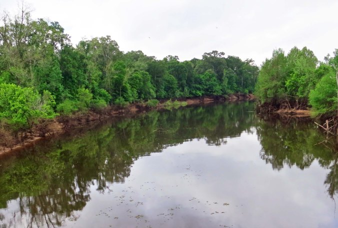A Louisiana bayou: half river and half swamp. All jungle. Picture a large water moccasin slithering across its smooth surface.