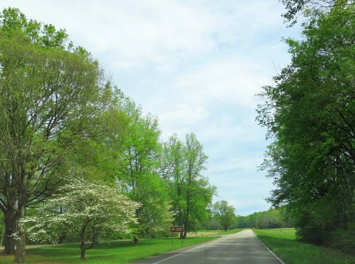We were a little late to capture the Dogwood along the Natchez Trace at it's best, but even here it adds its own beauty along the road.