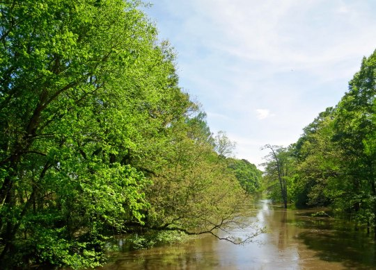 The Pearl River as it winds through Neshoba County Mississippi. Authorities would drag the river for the slain civil rights workers until an informal told them about the dam.