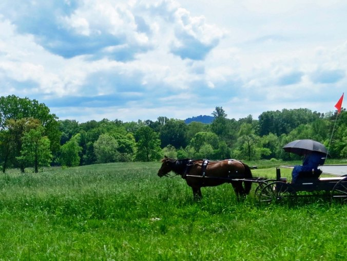 This Mennonite farmer was apparently out enjoying his/her farm.