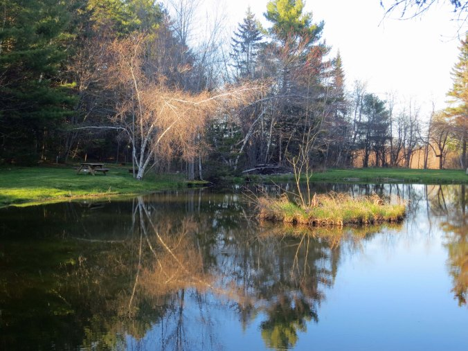 A small pond in Bangor provided me with a reflection shot.