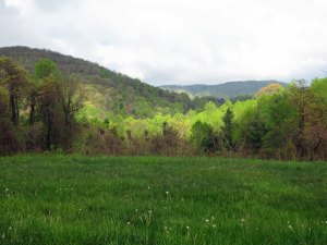 View of Blue Ridge Mountains and meadow along the Blue Ridge Parkway in Virginia.