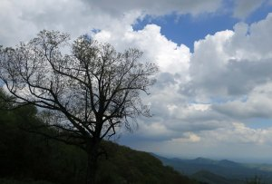 Tree silhouette backed up by clouds on the Blue Ridge Parkway in Virginia.