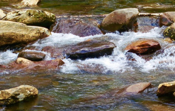 This stream kept me company as I biked up the mountain.