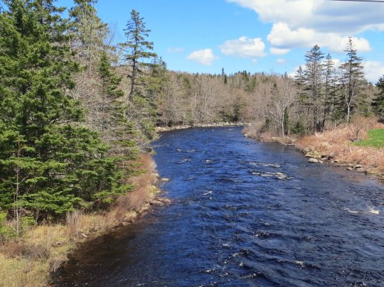 Riffled river on East Coast of Nova Scotia