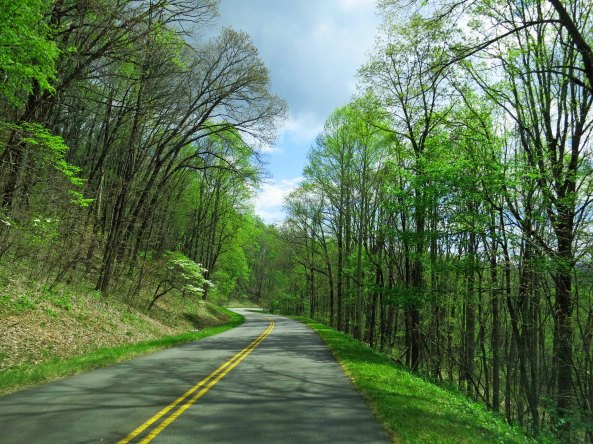 A tunnel of trees along the Blue Ridge Parkway leafing out in early spring green.