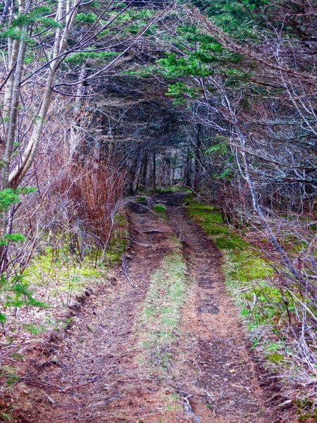 We found this mysterious 'road less traveled' along the Evangeline Trail.