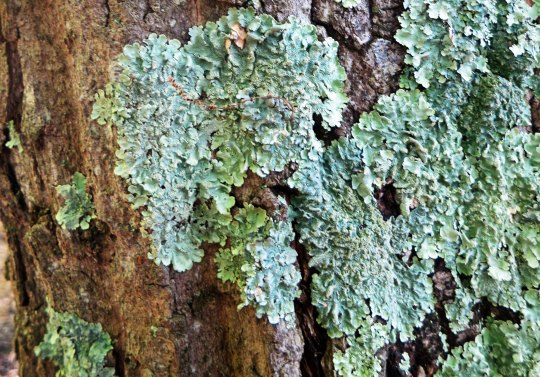 Tree lichens caught the attention of my camera.