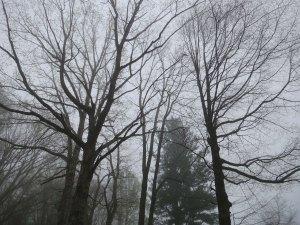 Trees along the Skyline Drive in Shenandoah National Park.