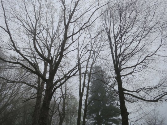 Trees along the Skyline Drive in Shenandoah National Park.