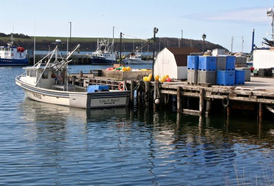 Leaving the Highlands, we came on several small communities along the coast where fishing is a major industry. Whale watching is also popular off the coast.