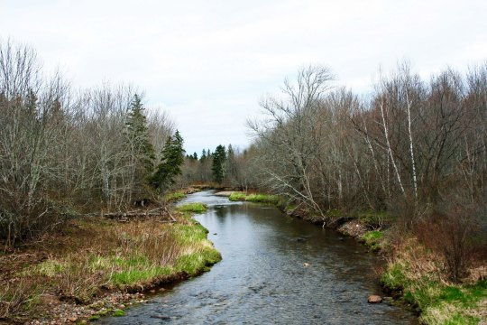 I'll finish off my Cape Breton photos with this rather lovely stream.