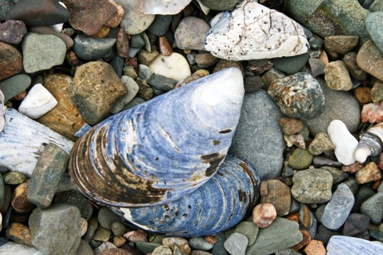 I found these shells much higher on the same beach. They spoke to more serious waves and stormy seas.