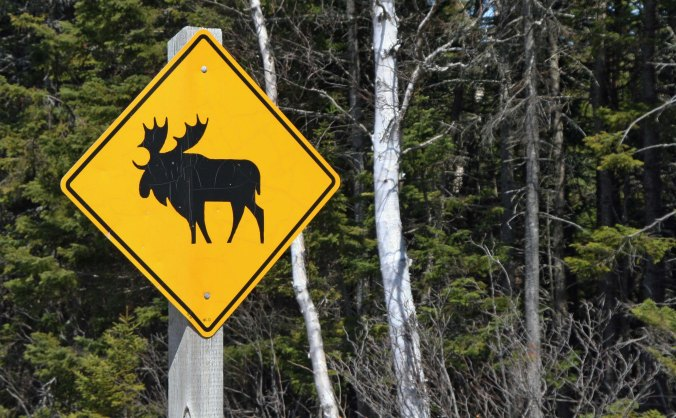 Signs along the road had been warning us about moose...