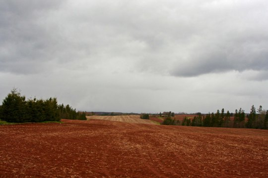 Prince Edward Island thrives off of its small farms where crops such as potatoes are raised. The island is noted for its red soils.