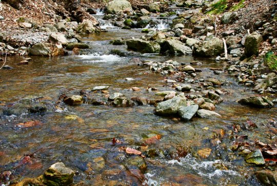 And this creek burbled along beside the cottage.
