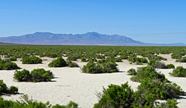Or this desert scene in Nevada.