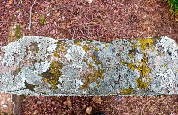 The top of this tombstone was covered with lichens that spoke of its gold rush era age.