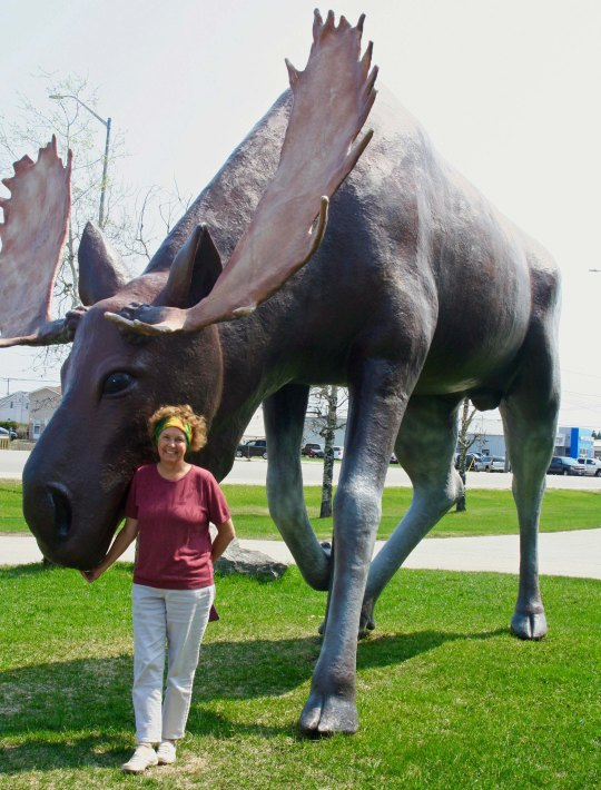 Large moose culture found in Hearst, Ontario Canada.