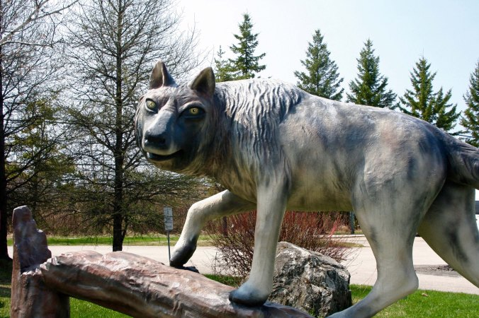 Wolf sculpture in Hearst, Ontario Canada.