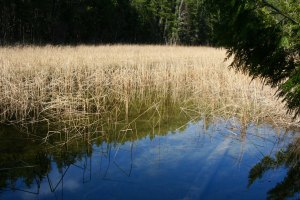 Reedy lake at Wild Goose Campground in Ontario.