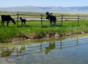 Wood cutouts of wild animals in Sulphur Springs, Montana.