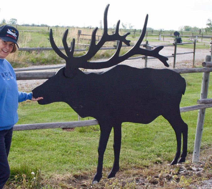 Peggy fed this one. Don't do this at home kids, Don't ever stick your hand in the mouse of an elk! :)