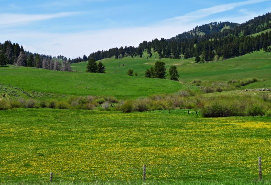 A final view for today's post. This one is near Bozeman, Montana. In my next post I will head south from Bozeman and into Idaho, another beautiful state.