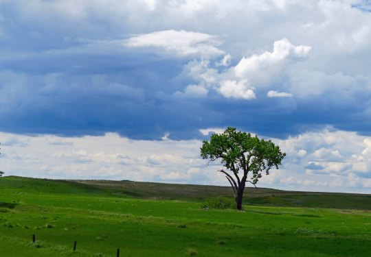 They call it Big Sky Country for a reason. The heavens seem to stretch on forever. But the enormity of the sky is matched by the state's mountains and rivers and valleys. Even this single tree has a statement to make.
