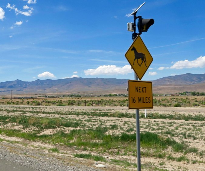 And signs to watch out for wild horses.
