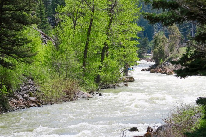 Snow melt turns the Gallatin River of Montana into a river runner's dream.