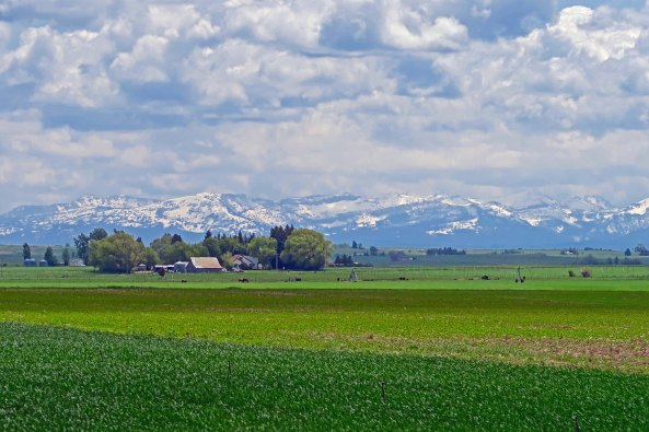 The mountains of central Idaho loomed in the distance above what was probably a potato farm near Rexburg.