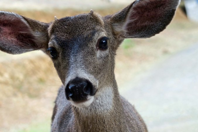"And I am sure that most of you remember Little Buck. ""Does anyone have an apple?"""