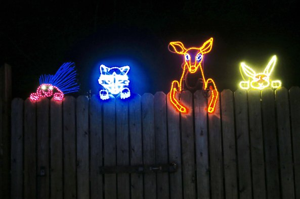 Animals look over fence at Oregon's Shore Acres' State Park Holiday of Lights display.