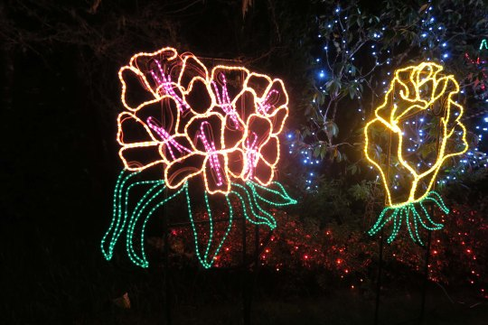 More flowers at Oregon's Shore Acres' State Park Holiday of Lights display.