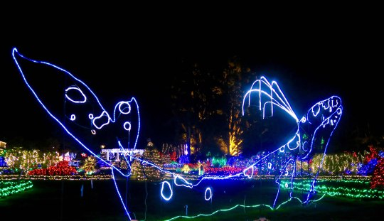 Grey whale featured in Holiday Lights display at Shore Acres State Park in Coos Bay, Oregon.