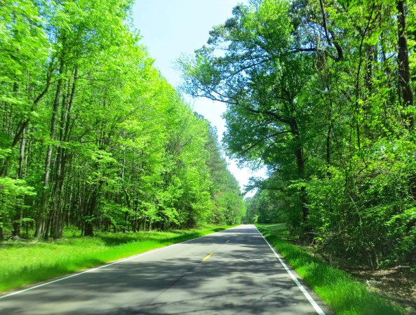 The Natchez Trace and the Blue Ridge Highway are both beautiful. It's the Trace here. An added advantage of both National Park highways is that no commercial traffic is allowed. Translate: I wasn't dodging 18-wheelers.