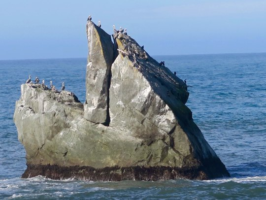 Close inspection showed it to a home for California Brown Pelicans.